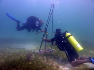 Obtaining a sediment core sample from a seagrass bed.