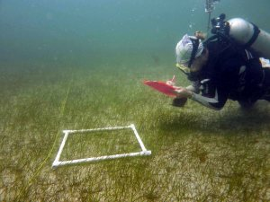 Recording biodiversity within seagrass beds.