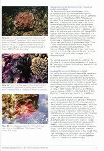 Pitcairn Marine Environment_p25_LR
