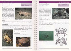 Pages featuring commonly seen crabs.