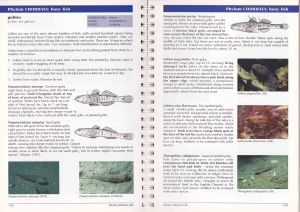 Pages showing various species of gobies and how to distinguish them.