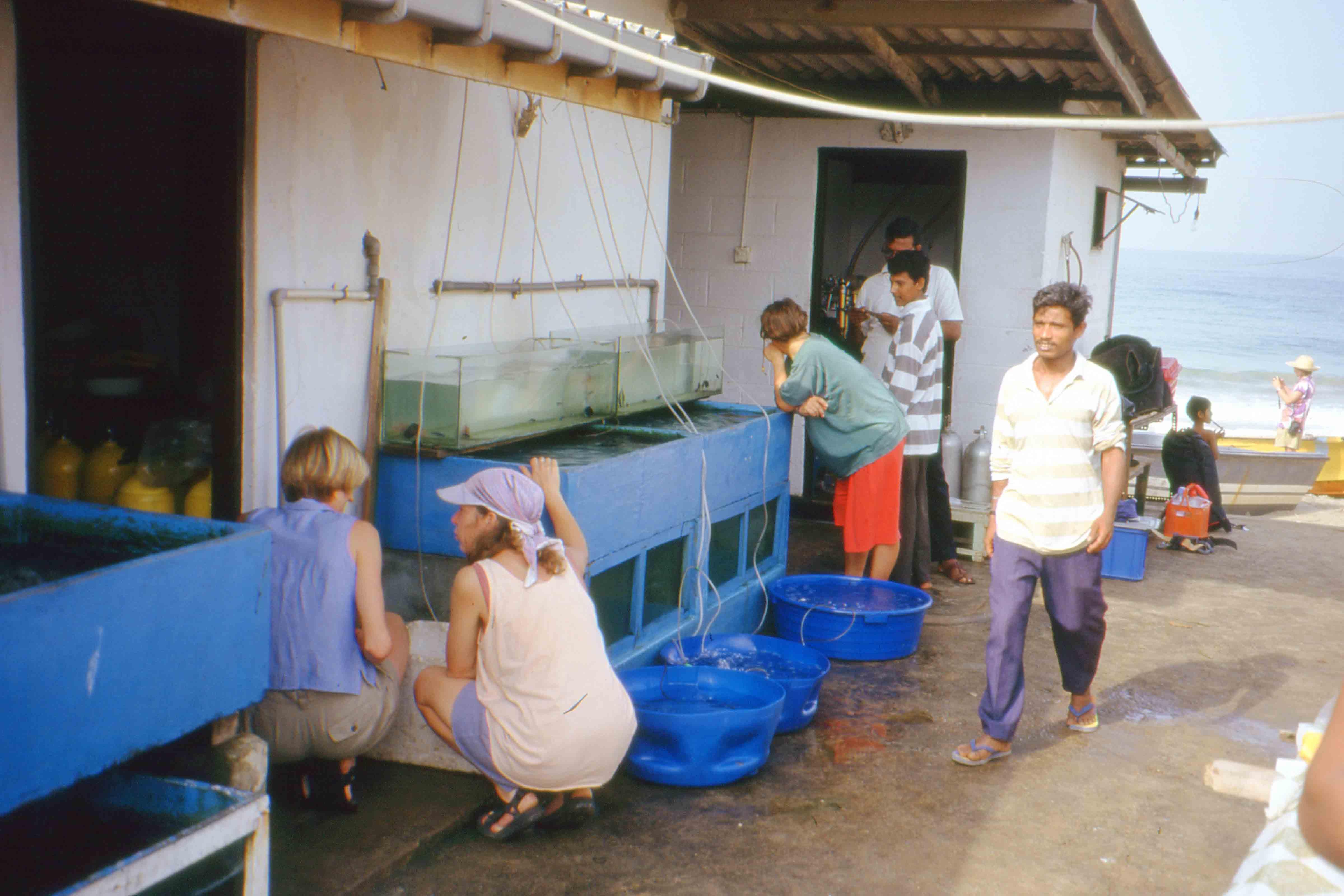Fish aquarium in sri lanka - Aquarium Holding Tanks_sri Lanka