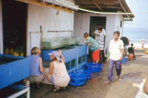 Aquarium holding tanks_Sri Lanka