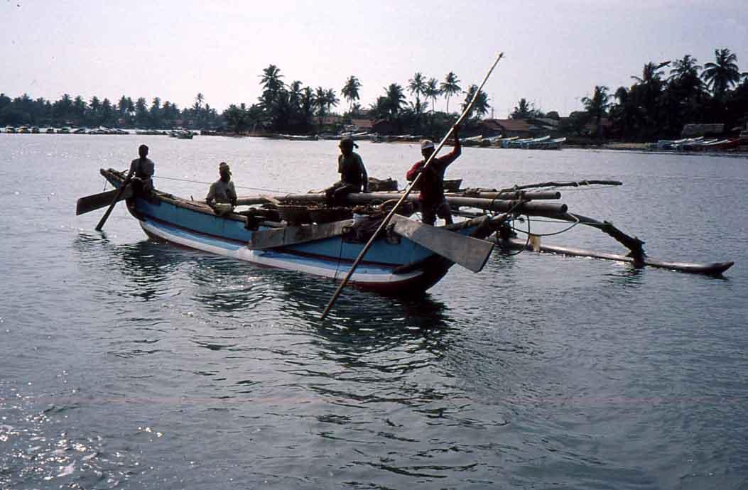 Sri lanka reef fish survey sea scope for Sri lanka fishing