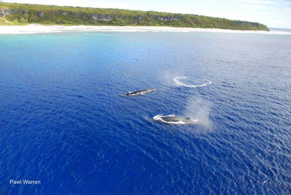 Henderson whales 2009_Pawl Warren_DSC_0102_LR adj